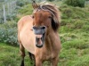 talkinghorse